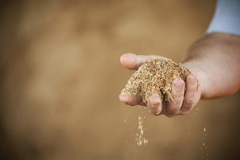 sawdust-timber-industry